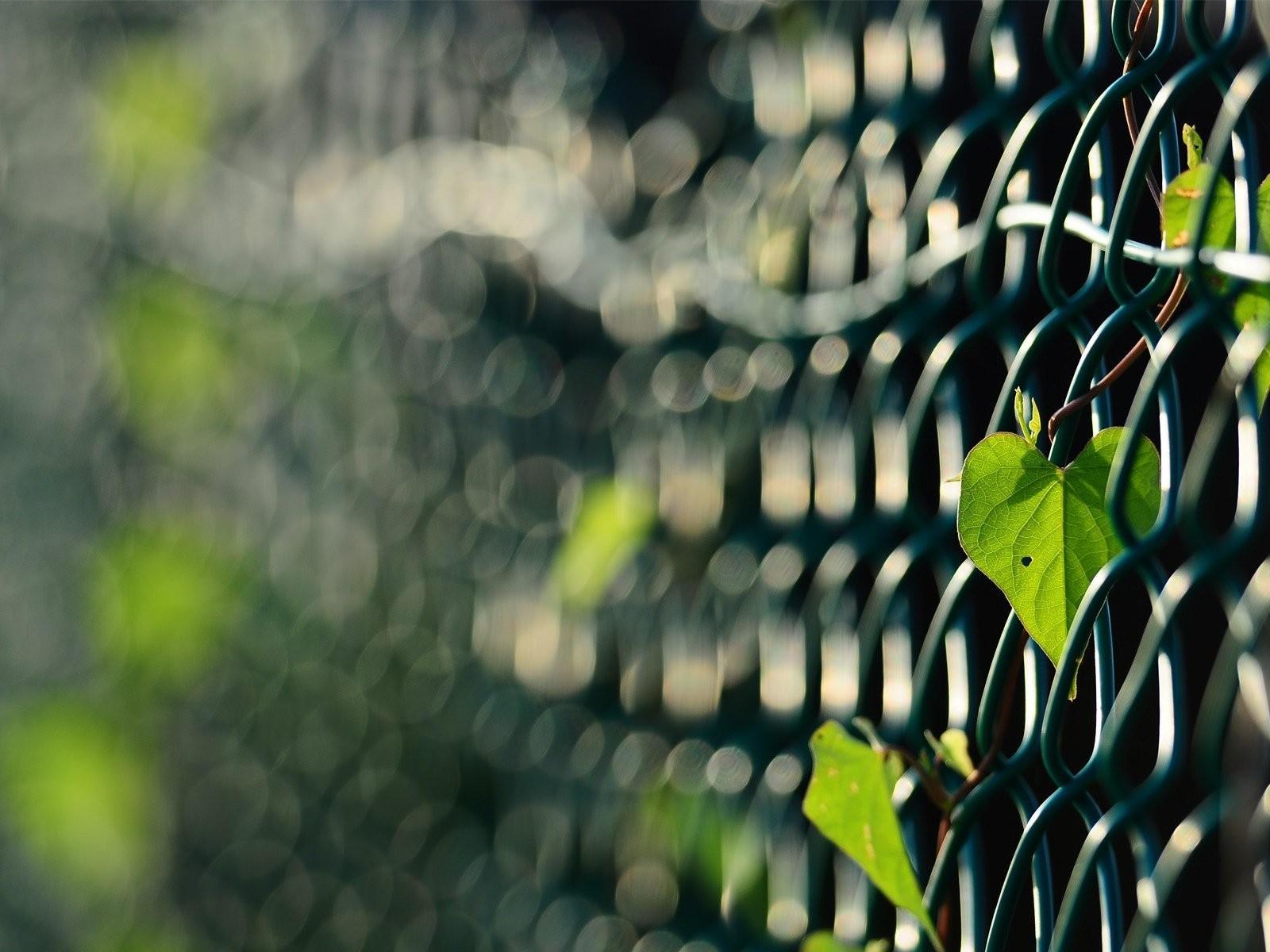 листья зелень фокус  № 1341673 без смс