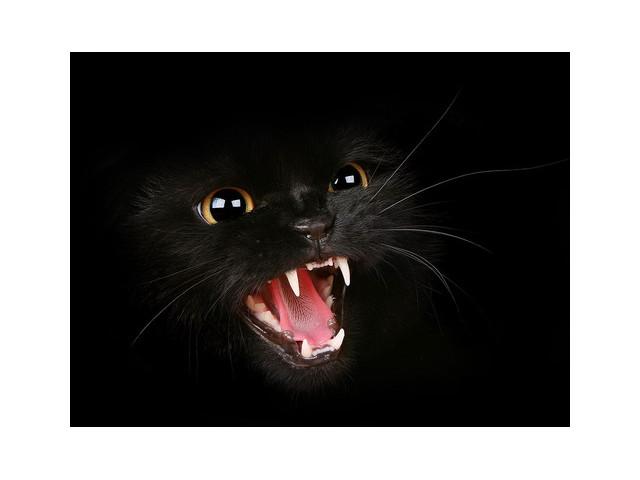 обои на рабочий стол черные кошки на черном фоне № 154858 загрузить