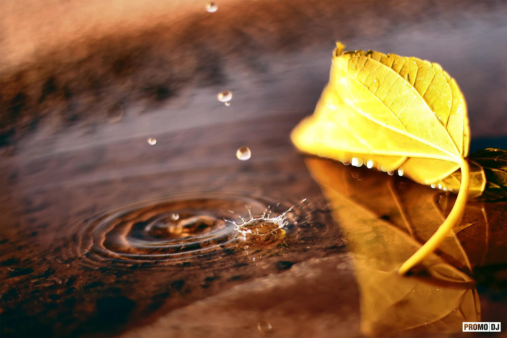 листок капля желтый на воде  № 2777378  скачать