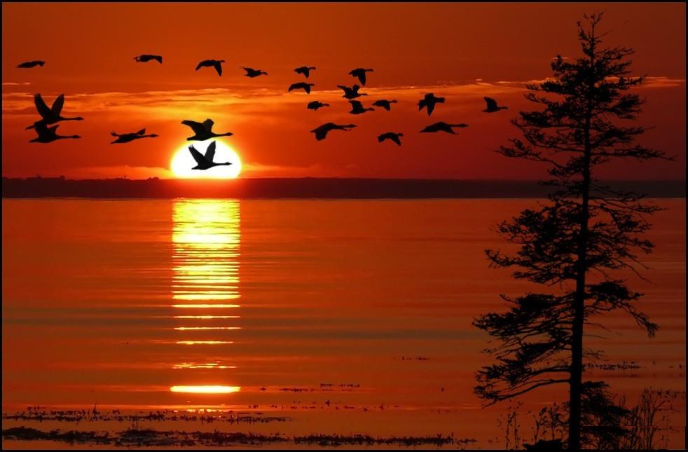 картинки птицы улетели некоторых