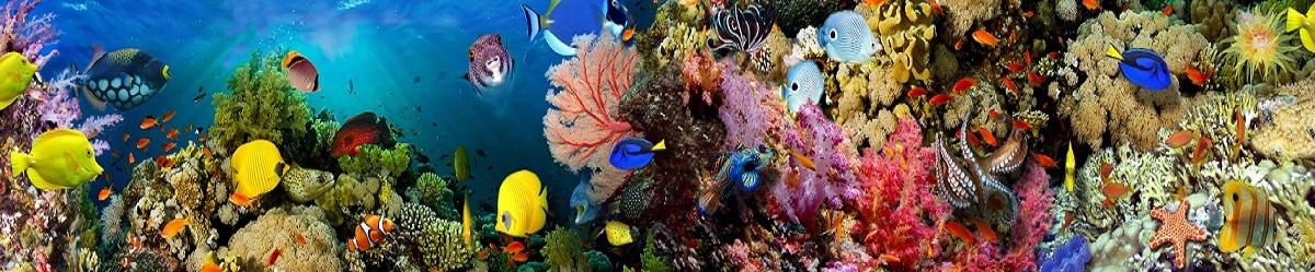 Скинали с красивым аквариумом стеновая панель для кухни цвет штрокс